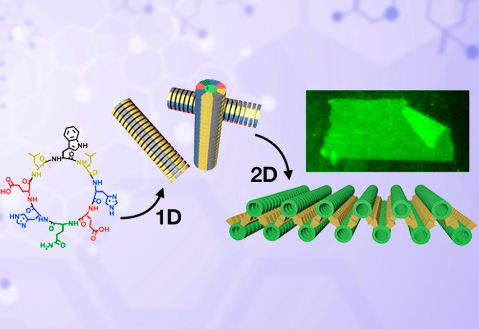 Peptide Self Assembly