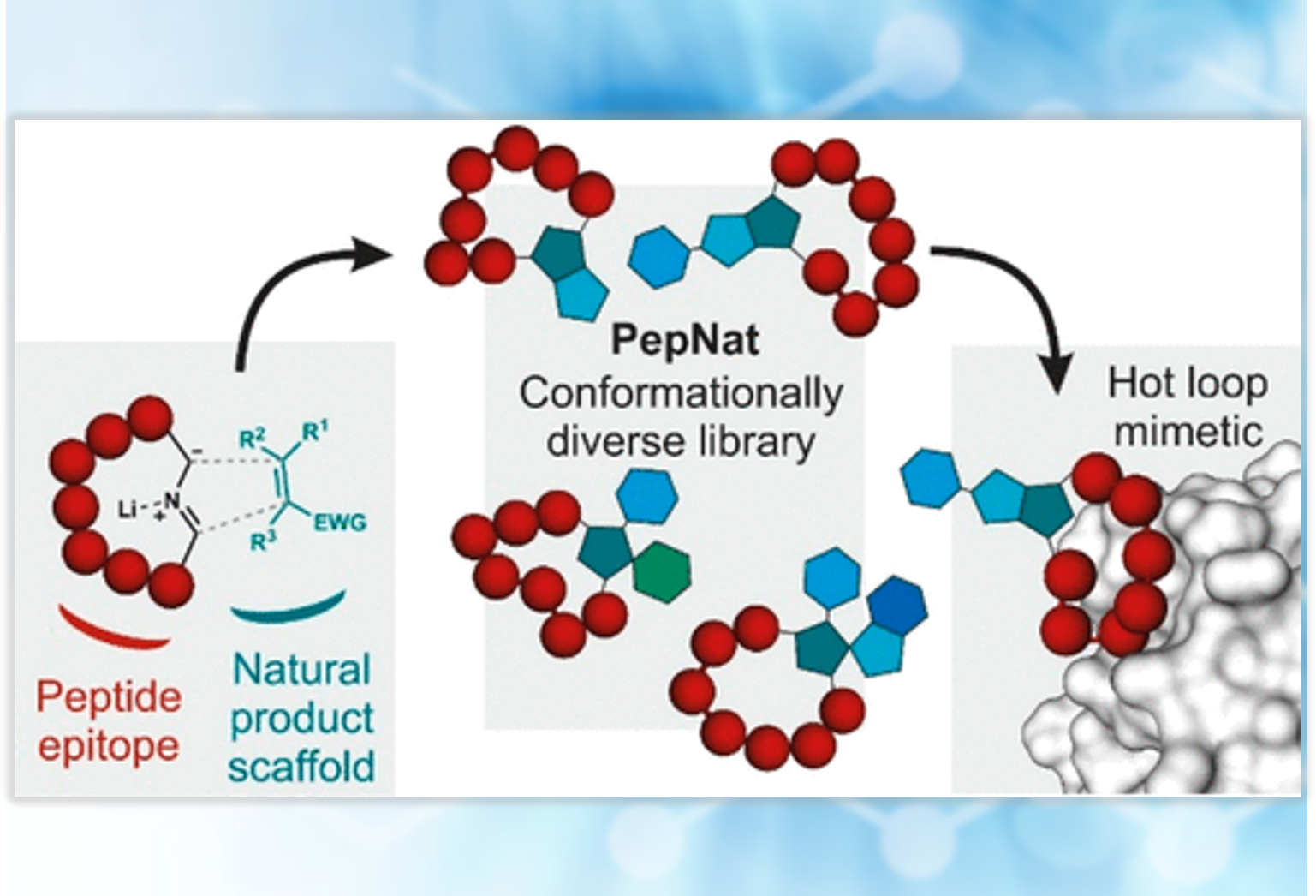 Constrained Peptides